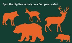 European safari - sustainable travel